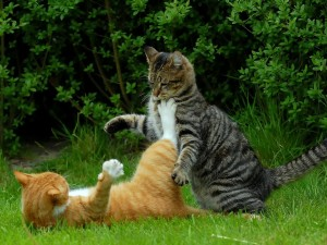 cats-fight-grass-color-conflict-2560x1920