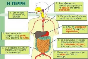pepsi-kai-igeia-meros-c-vitamines-ihnostoixeia-nero-kai-enzima (1)